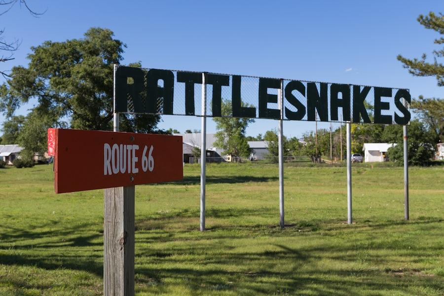 24 rattlesnakes
