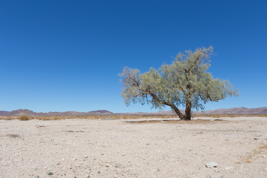01 bagdad tree
